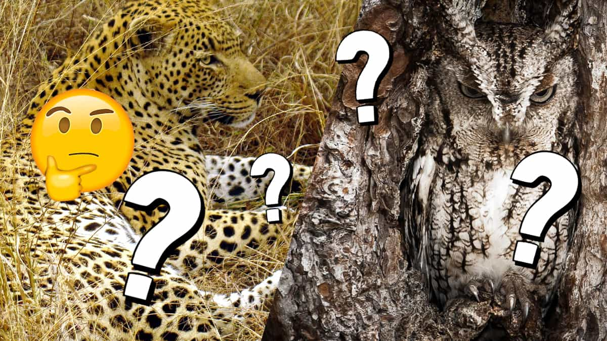 Can You Spot The Invisible Animals Hiding In These Photos Fun